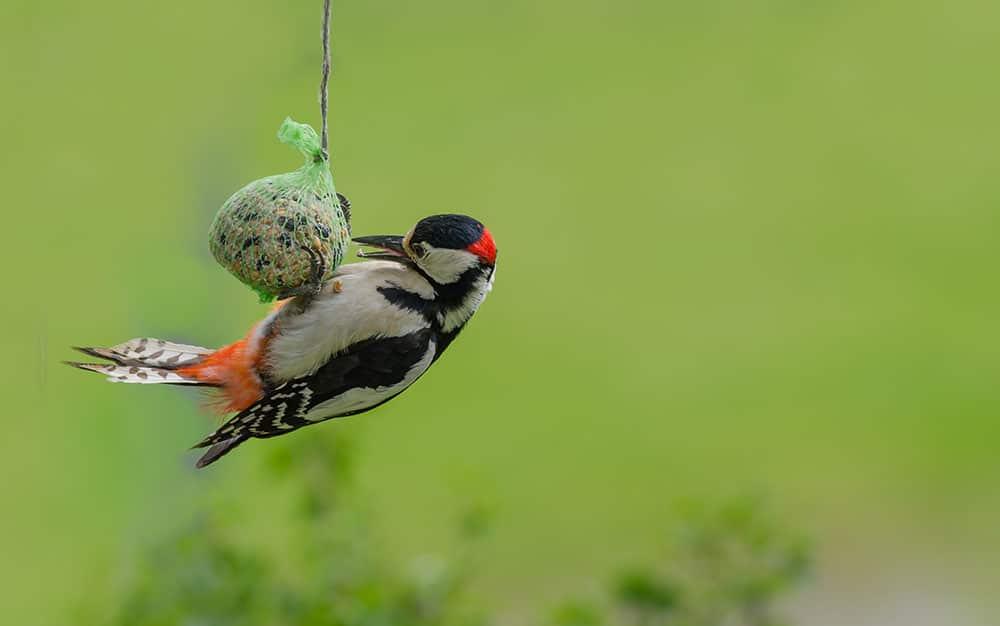 how to get more birds in your garden