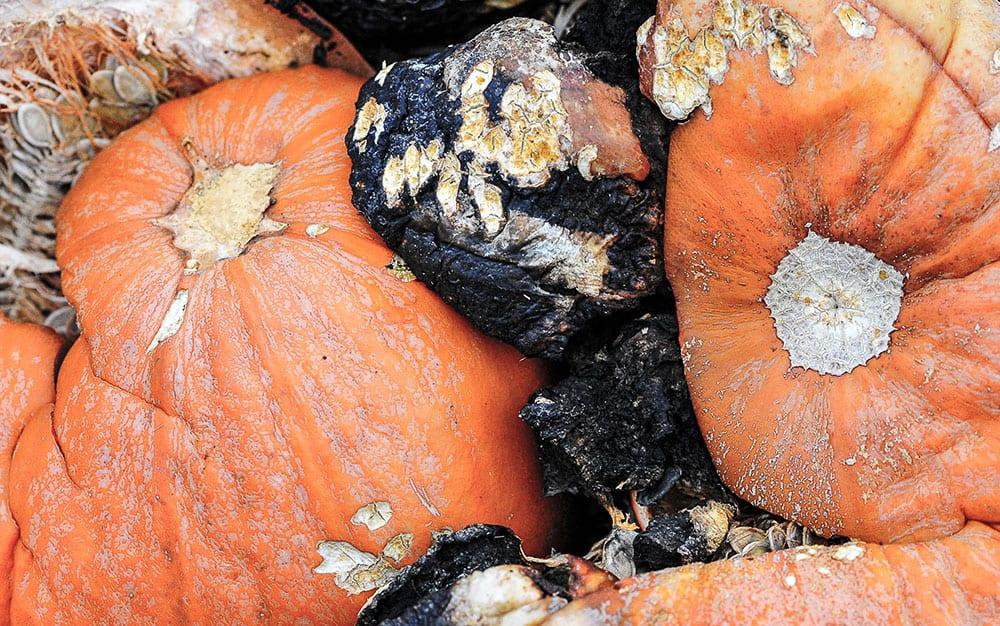composting-pumpkin