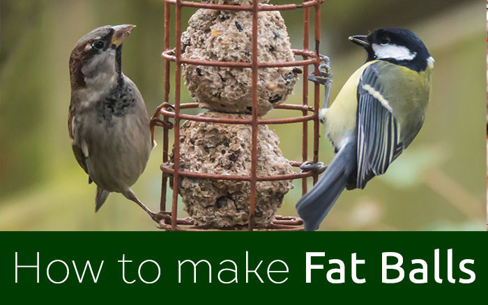 How to make bird fat balls