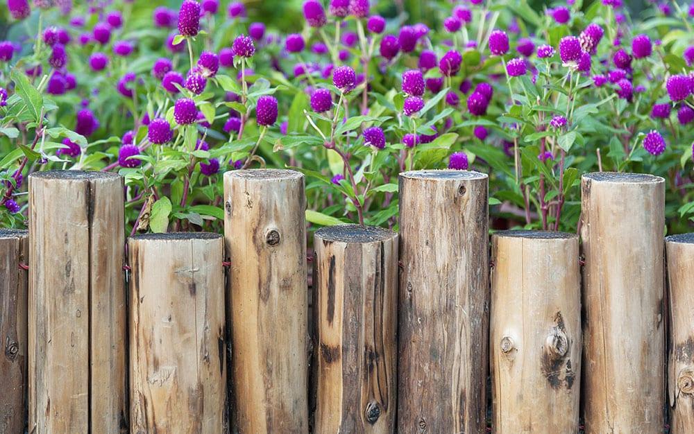 fence purple flowers