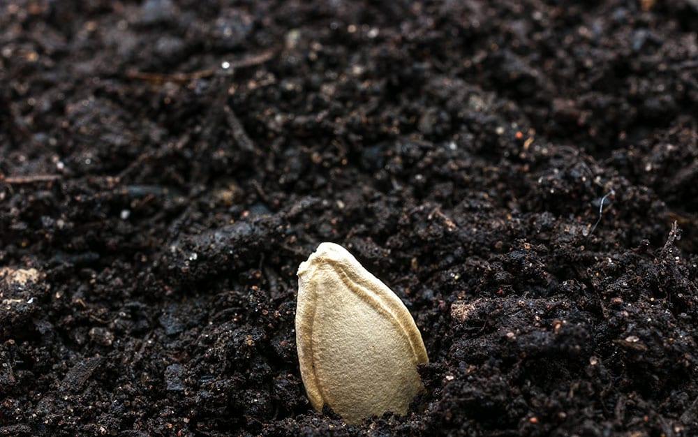 pumpkin-seed-in-soil