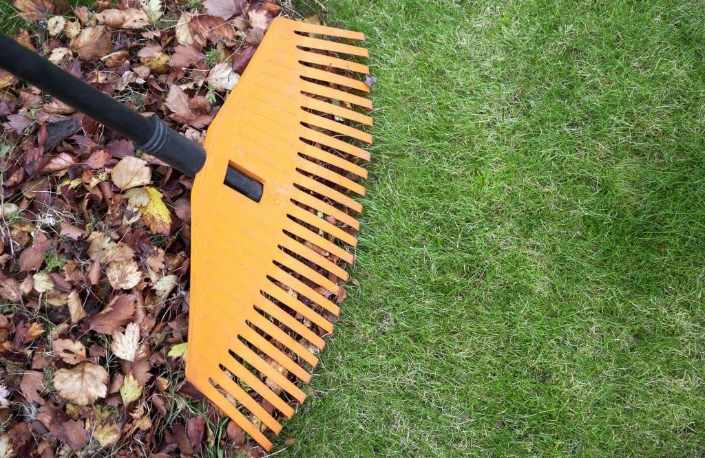 Garden Leaf Blocks : Gardening mistakes a mistake month david domoney