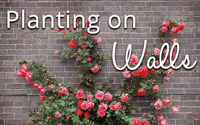 planting-on-walls-header-2