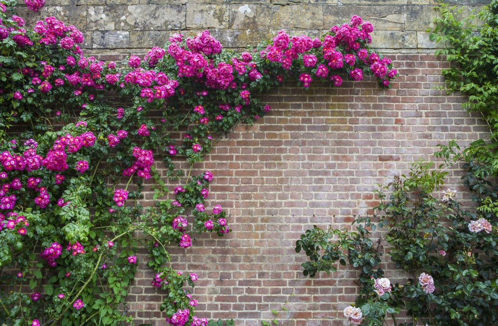 Ten Top Tips For Small Shady Urban Gardens: What To Do In Your Garden...