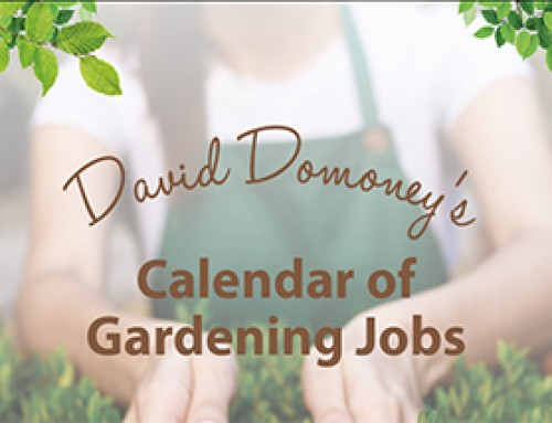 David Domoney's Calendar of Gardening Jobs