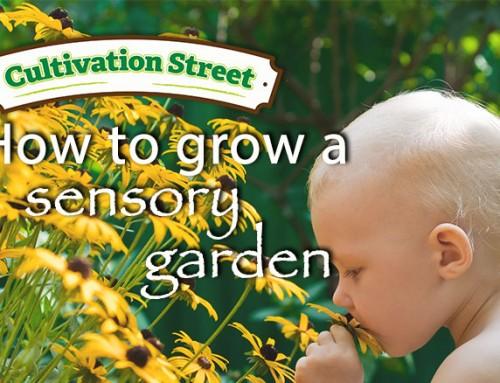Grow your own sensory garden