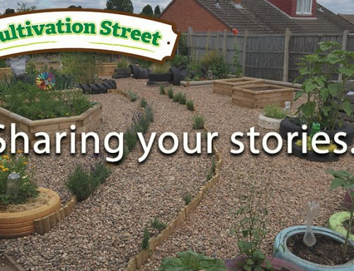 Cultivation Street 2016 Stories