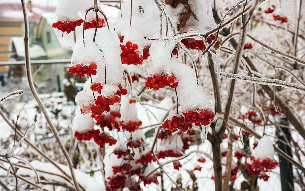 heavy-snow