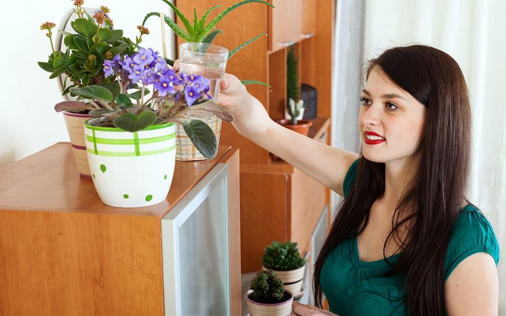 watering-houseplants