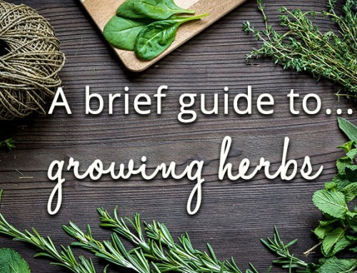 A brief guide to growing herbs