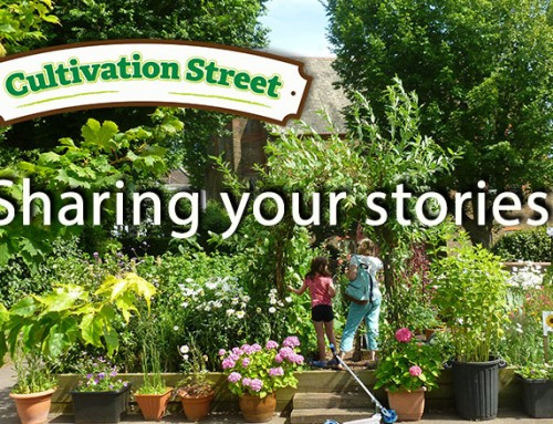 Cultivation Street Stories