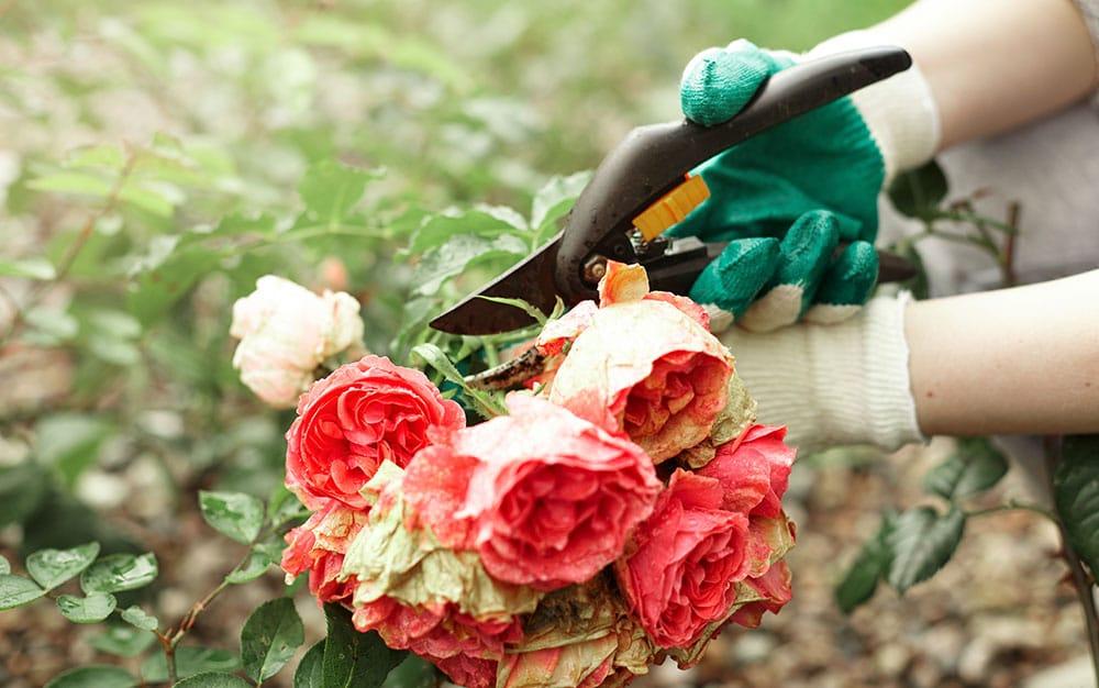 cut flowers from garden