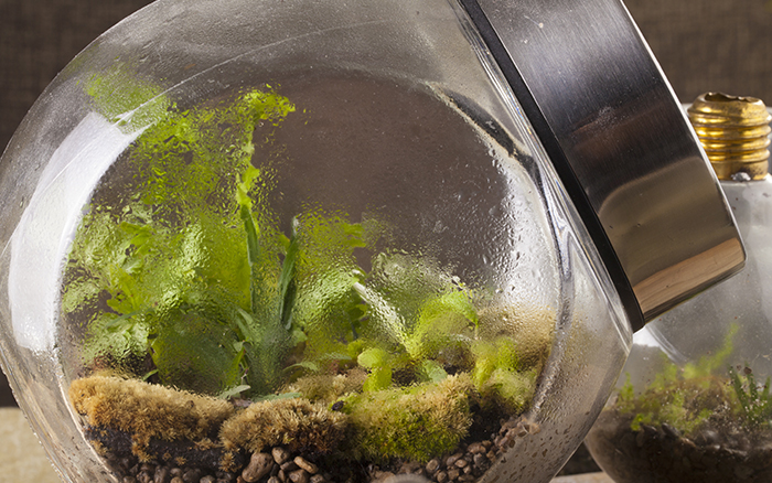 How To Make A Terrarium David Domoney