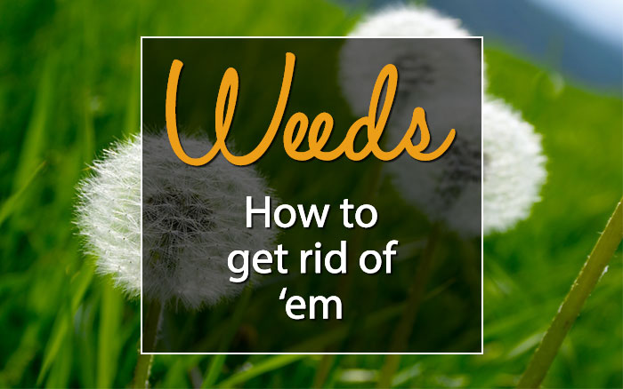 How to get rid of weeds david domoney for How to get rid of weeds in garden