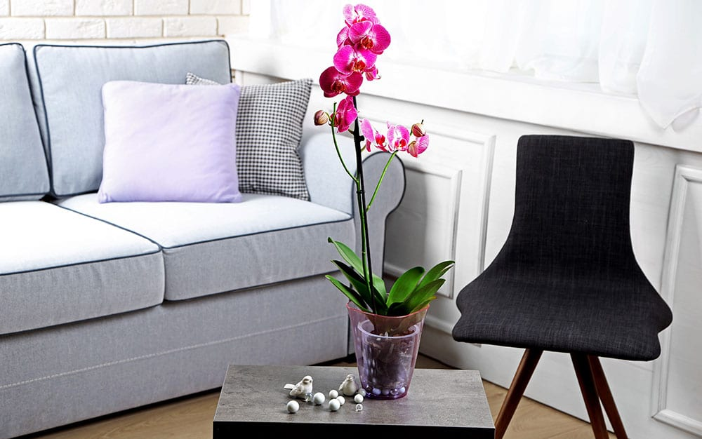 orchid-in-lounge