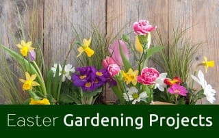 Gardening jobs archives david domoney for Gardening jobs for april