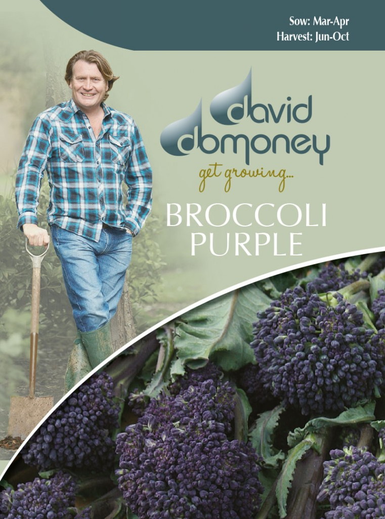 how to grow purple broccoli
