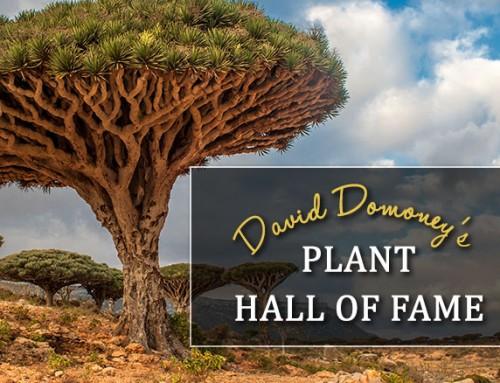 Plant Hall of Fame