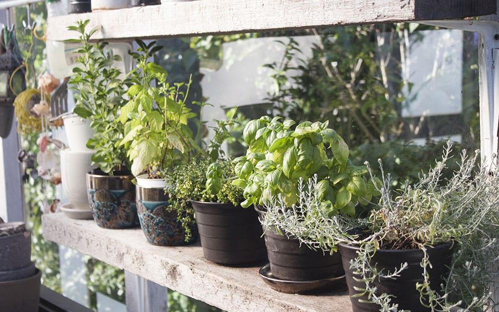 herbs-sunshine