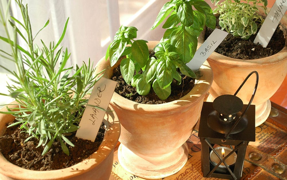 herbs-terracotta-pots-windowsill