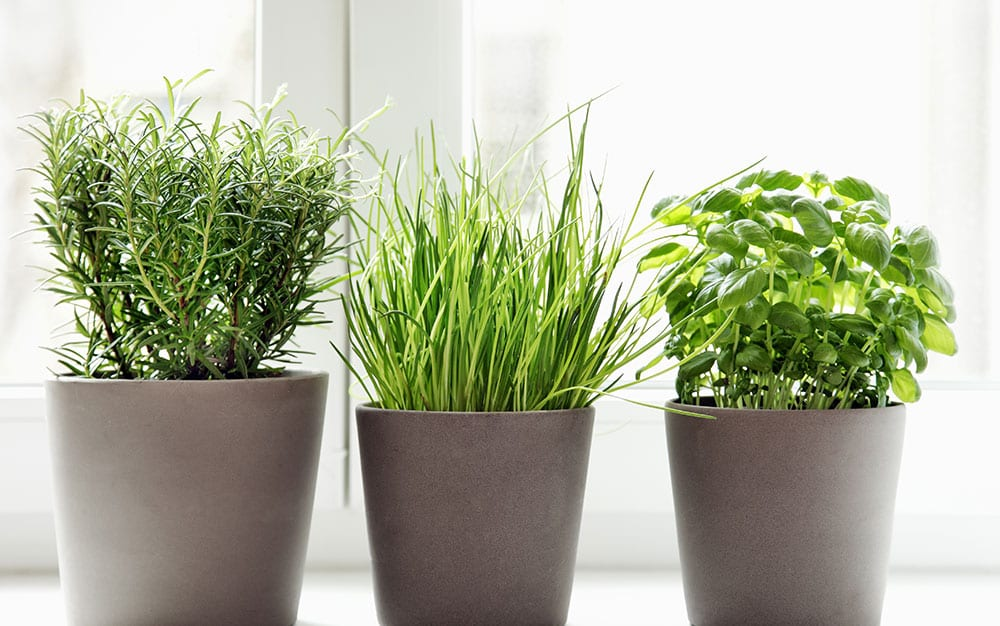windowsill-herbs