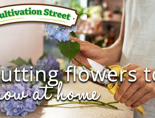 Cultivation Street's top cutting flowers you can grow at home