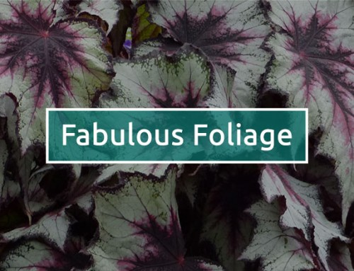 Fabulous foliage ideas from this year's Flower Shows