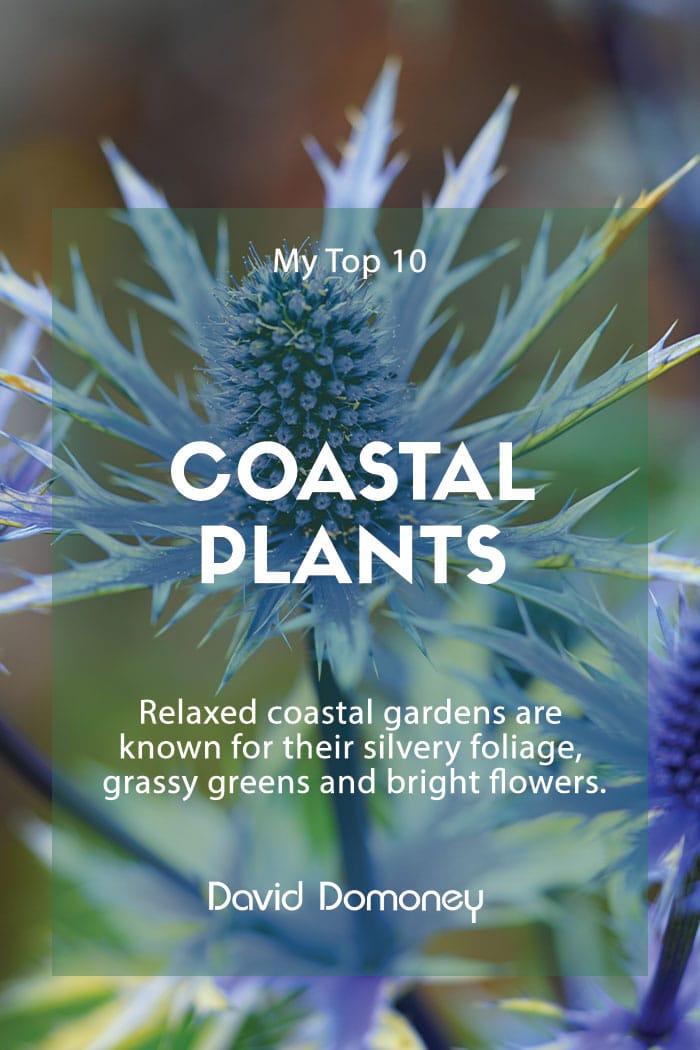 10 Plants For A Coastal Garden Style - David Domoney