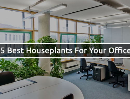 5 Best Houseplants For Your Office