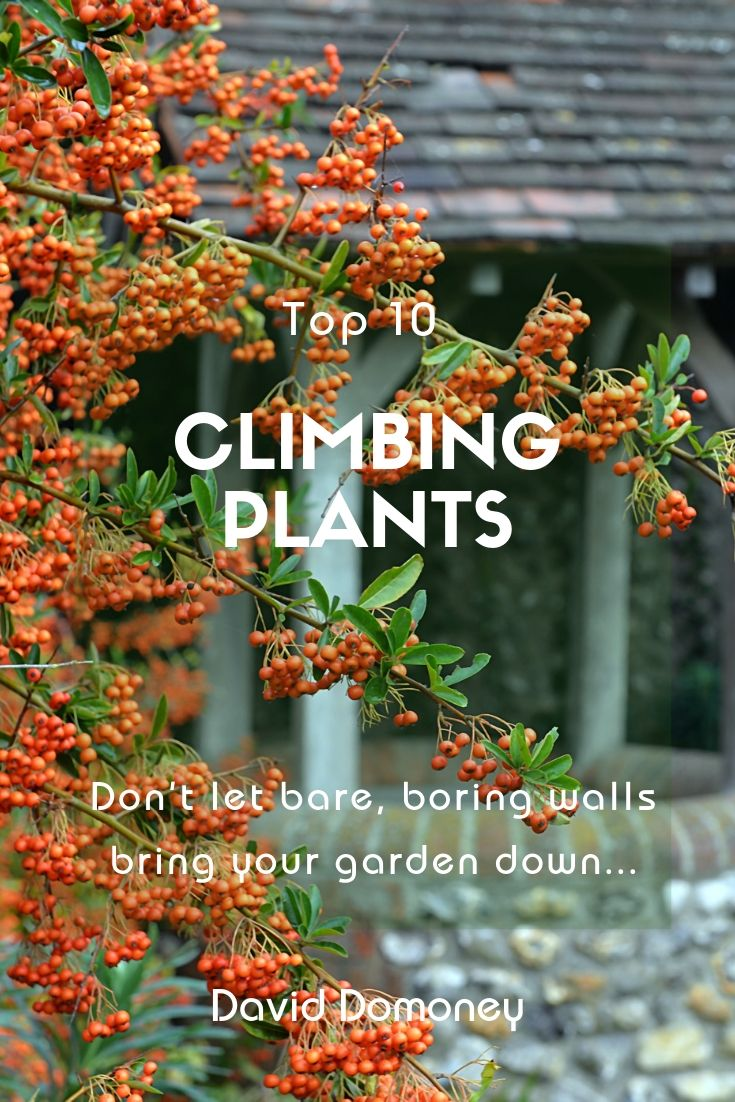 Best 10 Climbing Plants David Domoney