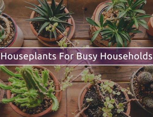 Best low maintenance houseplants for a busy household