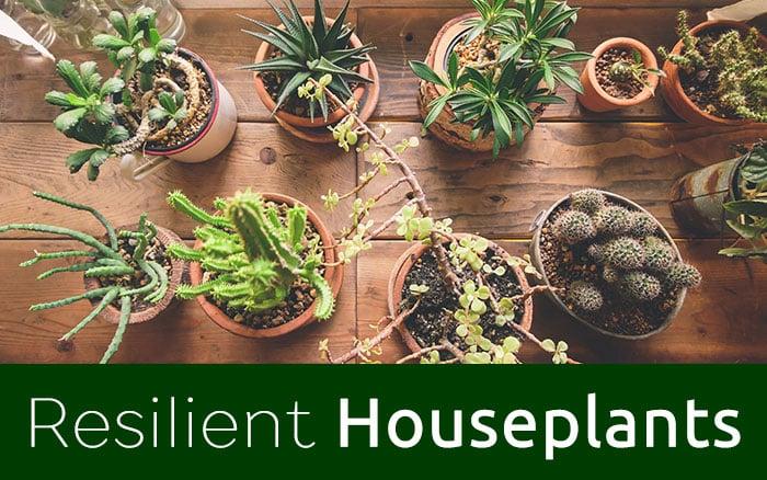 resilient-houseplants