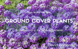 The best ground cover plants
