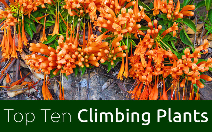 New feature climbers
