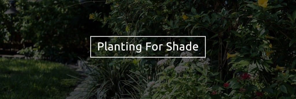 Shade plants for Shady Garden