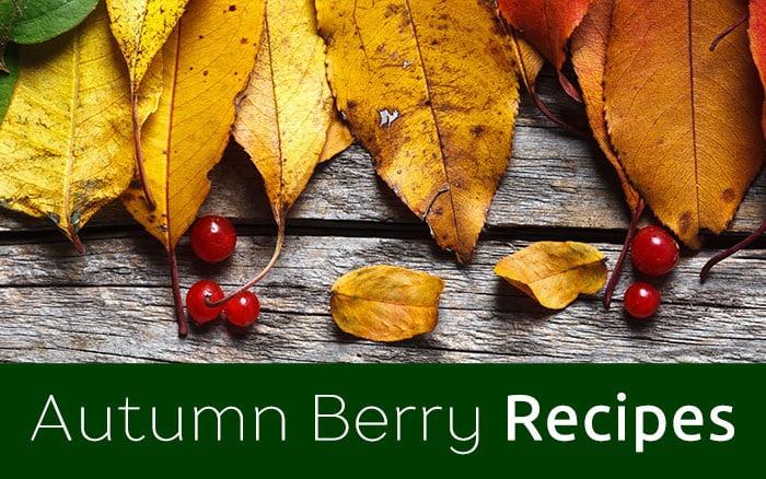 autumn-berries