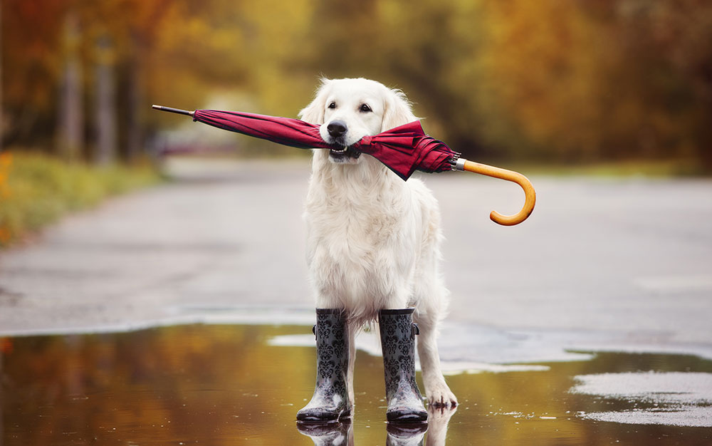 doggo in wellies