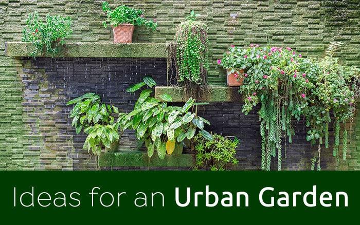 Ideas for an Urban Garden