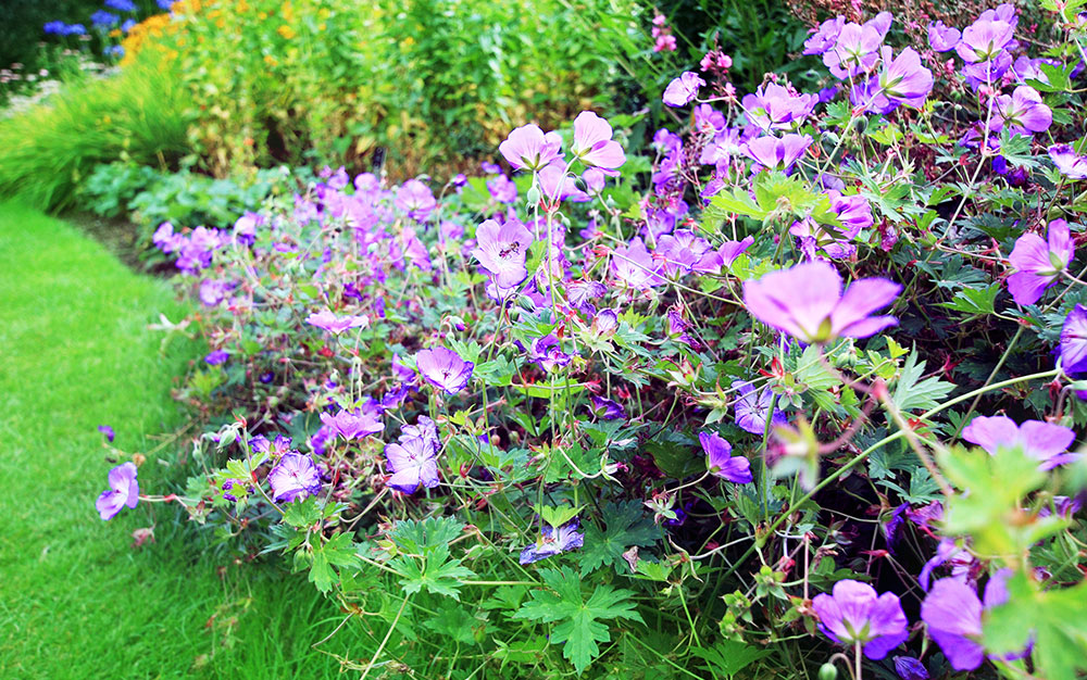 Best Ground Cover Plants And How To Use Them David Domoney