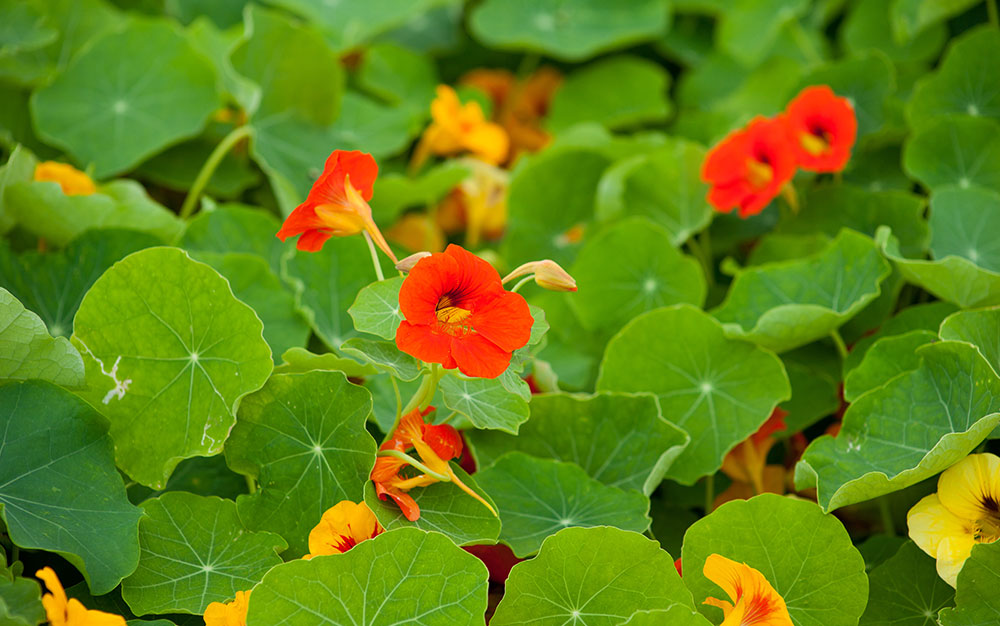 Best Ground Cover Plants and How to Use Them - David Domoney