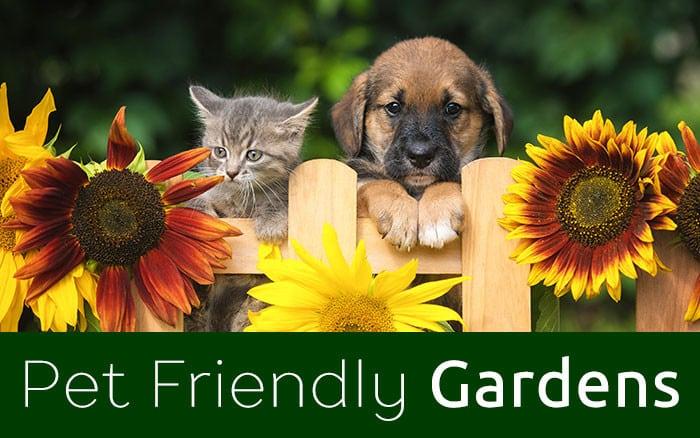 Pet Friendly Gardens