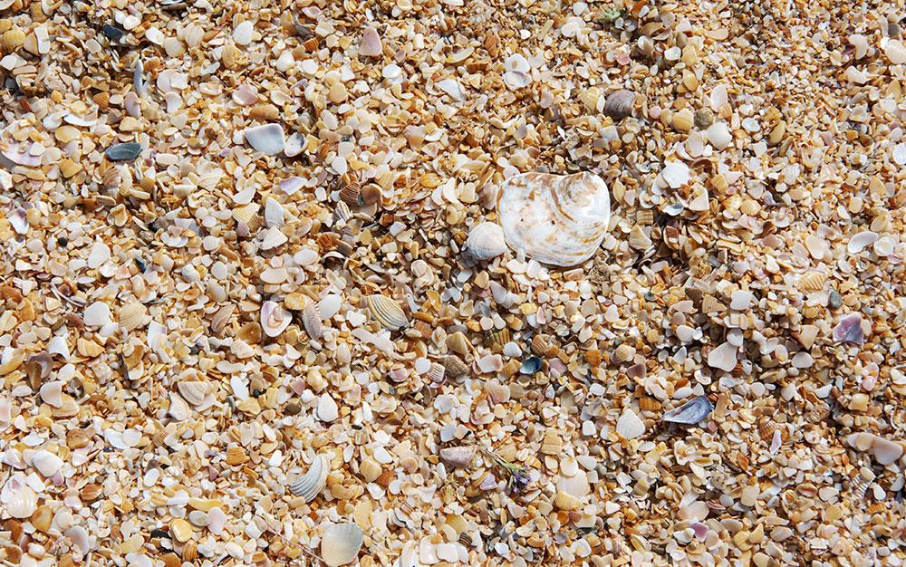 sea shells mulch