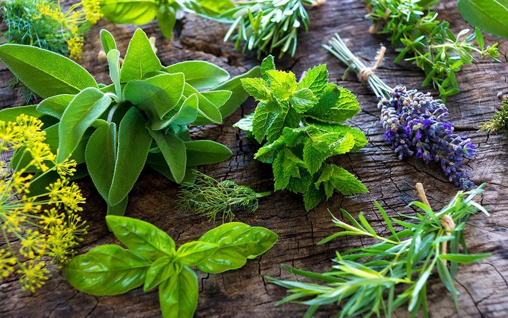 various-herbs