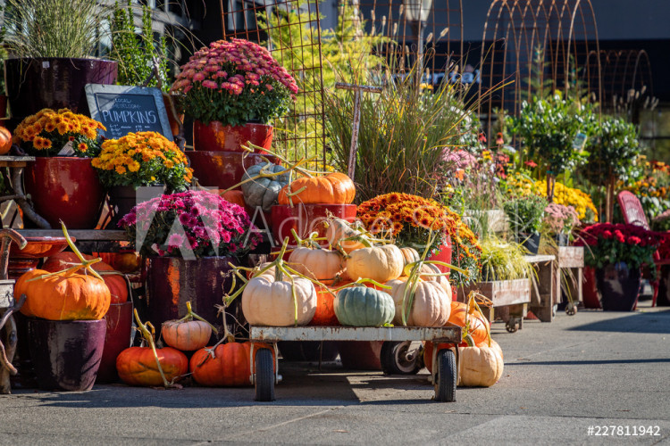 supermarket-pumpkins