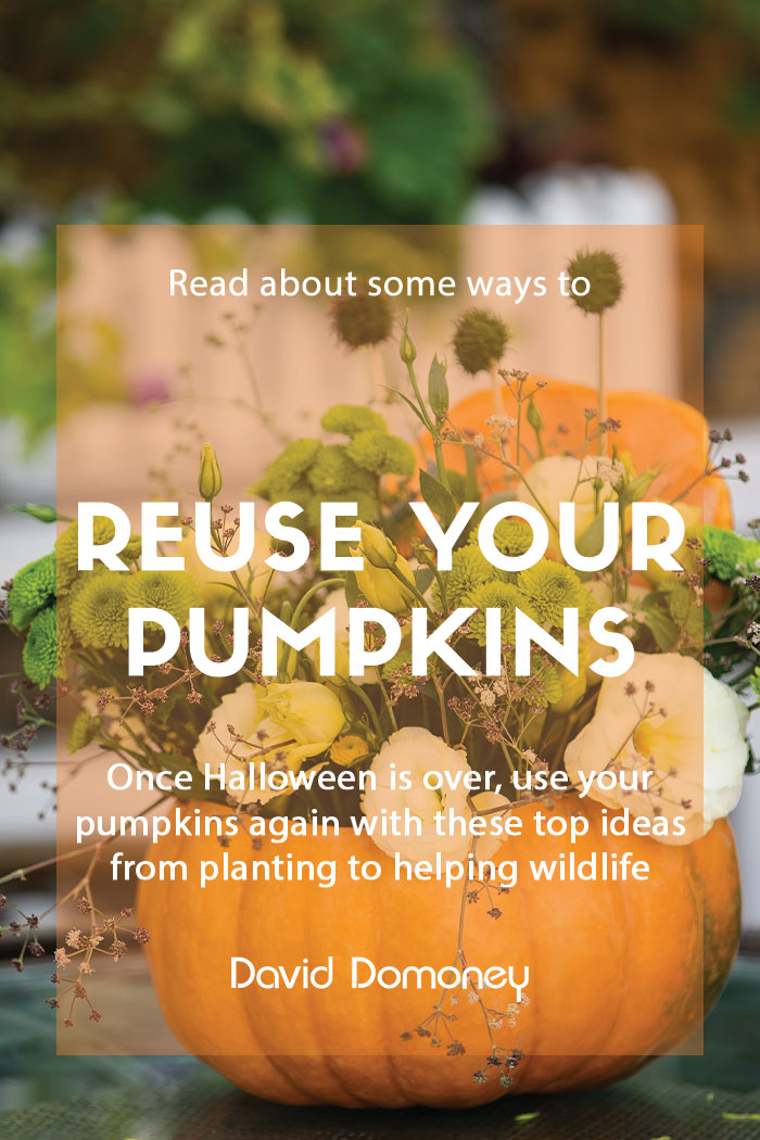 reuse pumpkins