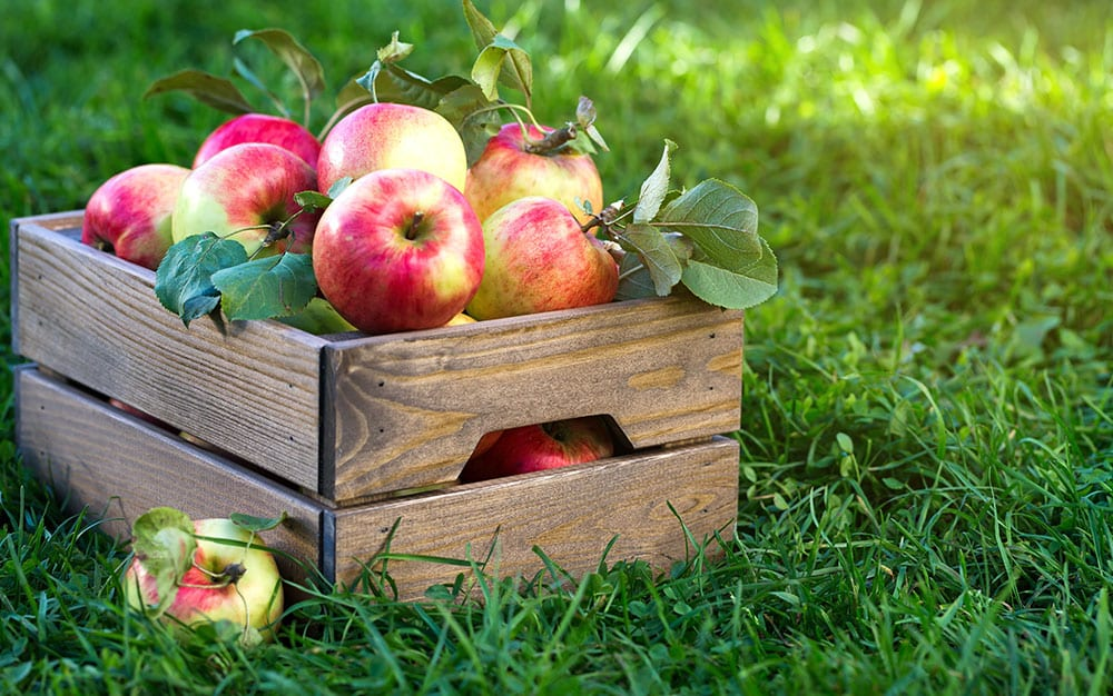 apple-tree-box