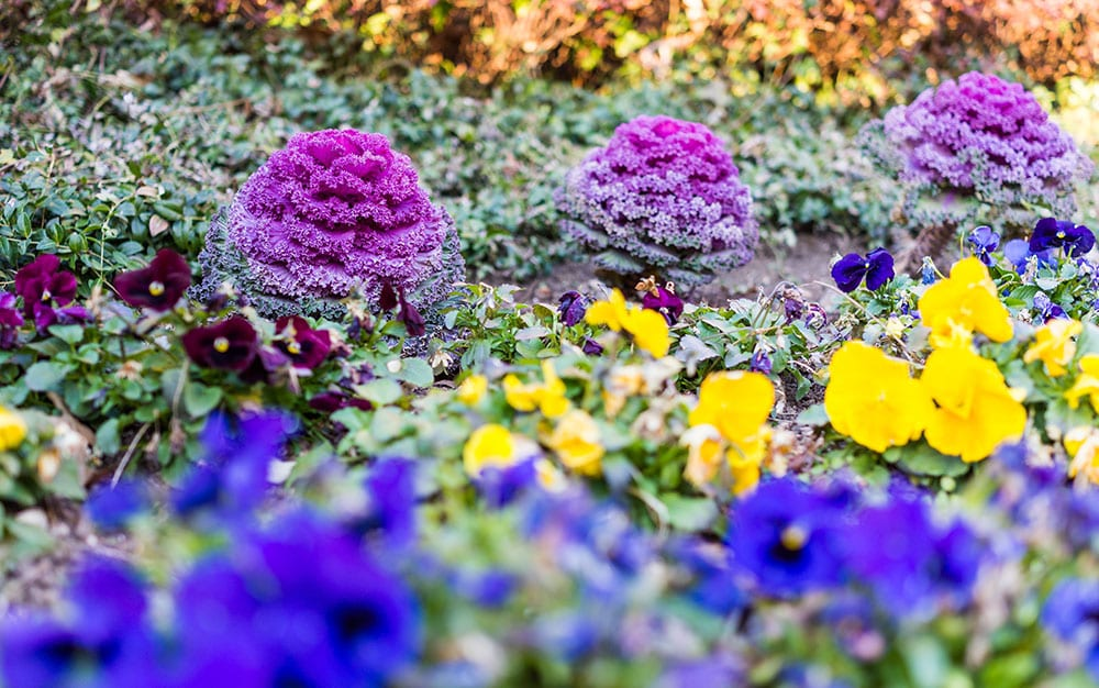 colourful-winter-border