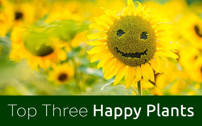 top three happy plants