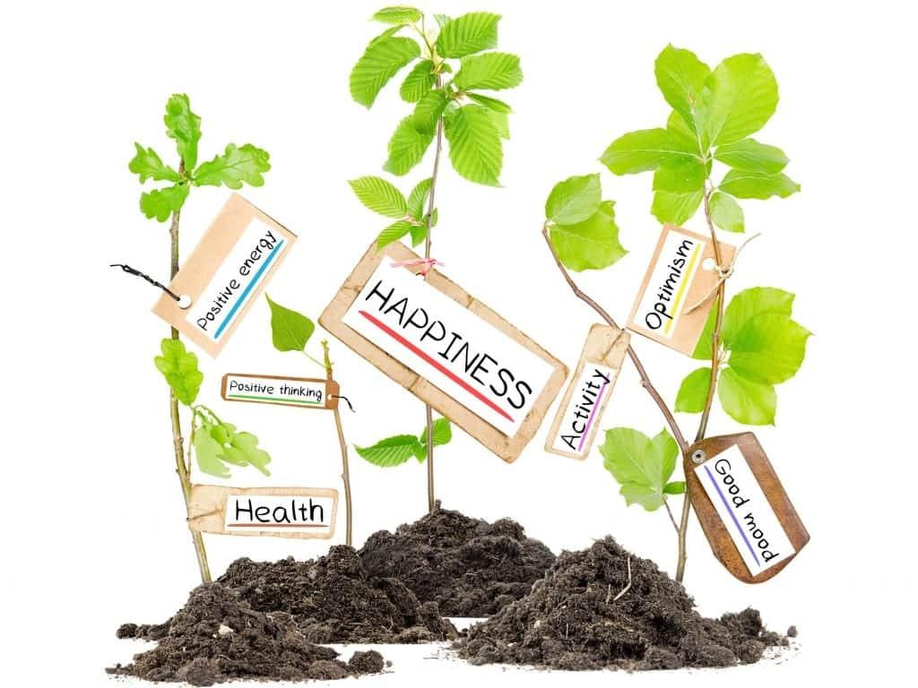 Benefits of Gardening for Mental Health - David Domoney