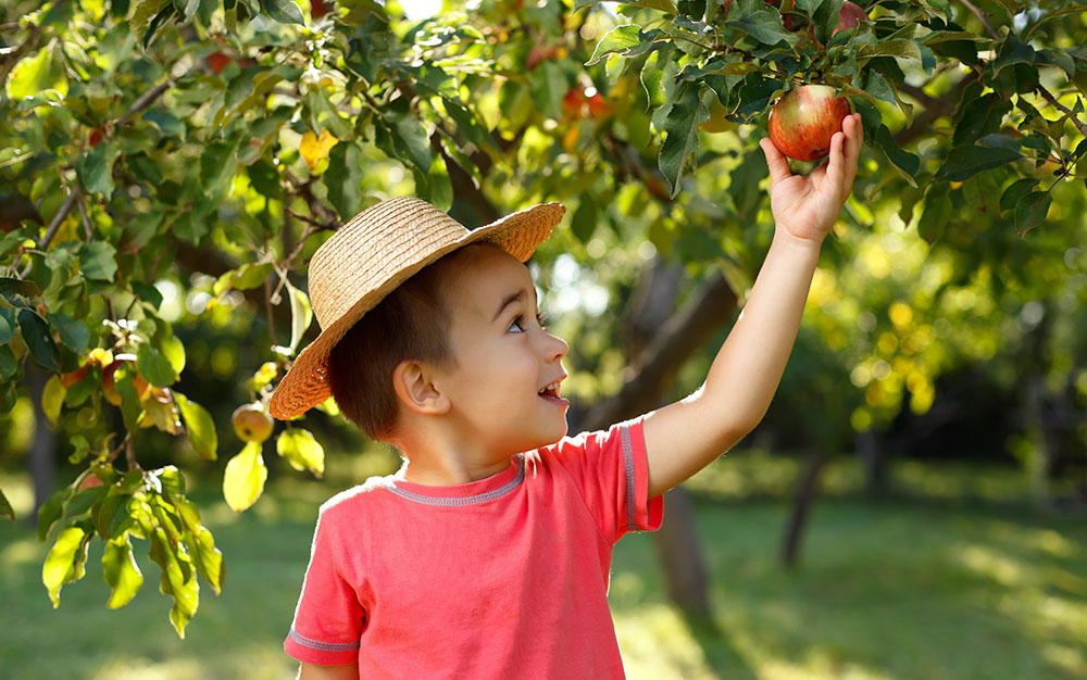 kid-picking-apple